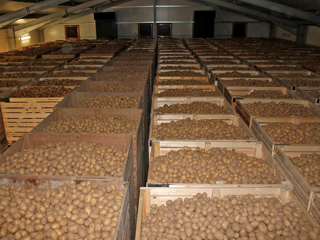 Elsterhof Kartoffel Lagerung