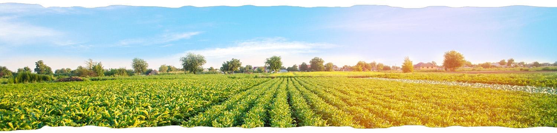 Elsterhof kartoffelanbau